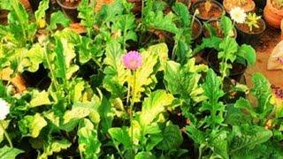 Royal Garden -  a flower nursery at Wayanad