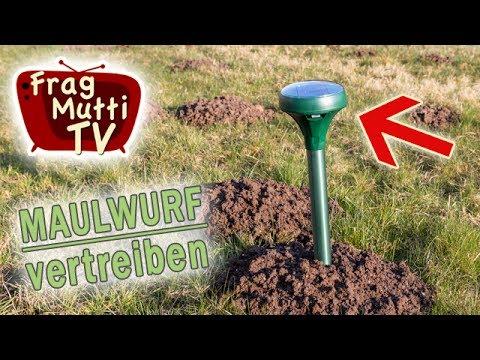 Maulwurf vertreiben - 3 Tipps | Frag Mutti TV