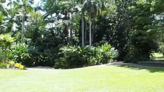 2015-10-06 Botanical gardens, Cairns