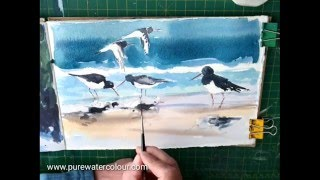 How To Paint Oyster Catchers in Watercolour
