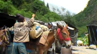 Trekking from Govindghat to Gangharia