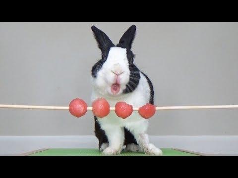 Rabbit eating watermelon balls ASMR