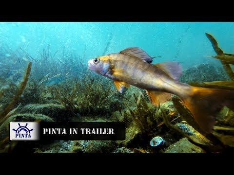 Il programma che pesca in linea immagazzina