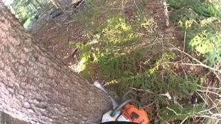 Domino effect tree felling