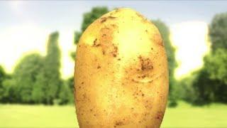 Günsches potato friend