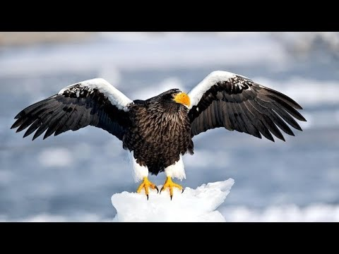 Eagles on Ice – Upcoming  Japan Hokkaido Trip and fun  Quiz questions