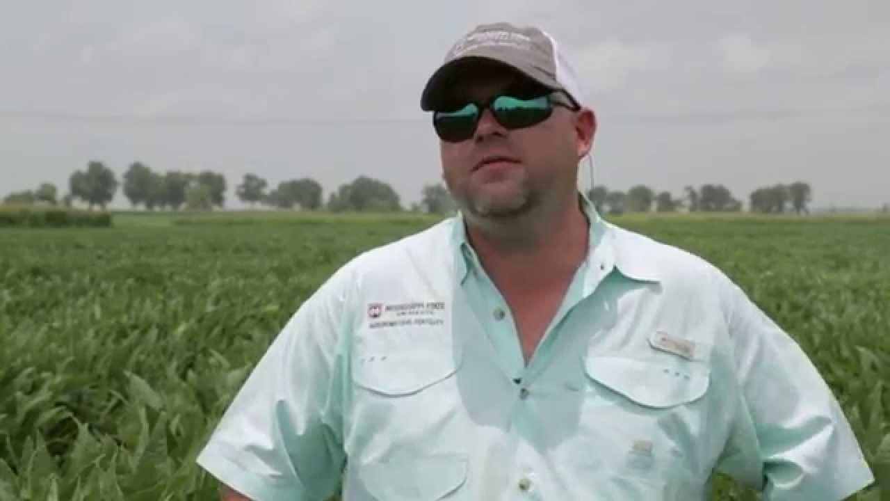 Dr. Bobby Golden, Agronomist, Mississippi