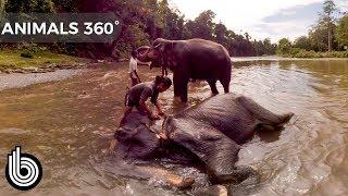 Bathing Elephants | Animals In 360°