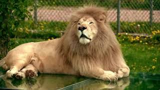 Parc Safari - Zoo - Plus de 500 animaux