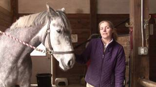 Horses Care & Grooming : Horse Care Grooming Tips