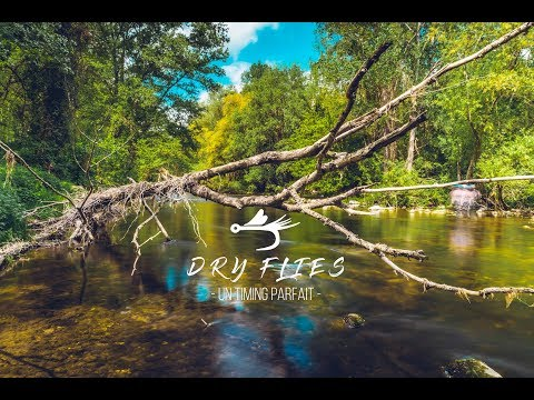 DRY FLIES : un timing parfait