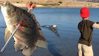 Bowfishing: Kid Makes An Amazing Kill Shot On A Moving Tilapia