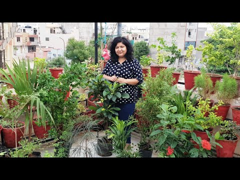 My Garden Shopping - Plants and Pots || Monsoon Garden Shopping Haul || Fun Gardening