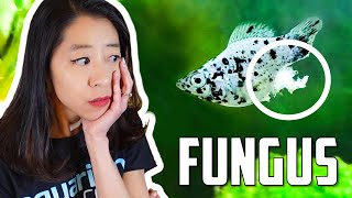How to Fight Fungus on Aquarium Fish by Aquarium Co-Op