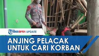 Petugas TNI-Polri Kirim Anjing Pelacak untuk Cari Korban Longsor di Nganjuk, Terjunkan 350 Personel