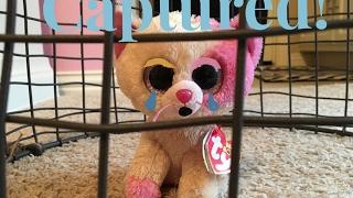 Beanie Boos: Captured!