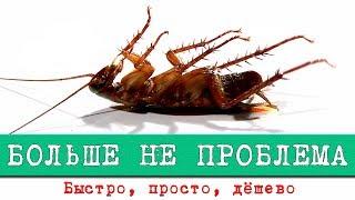 Самый лучший способ избавиться от тараканов. Это больше не проблема. Интересные факты о тараканах.