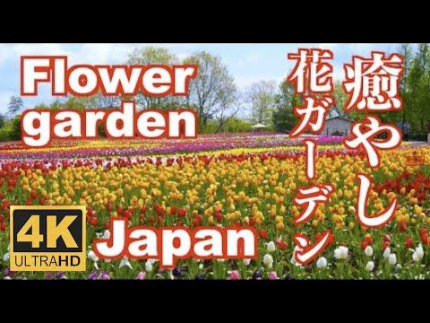 , title : '4K フラワーガーデン 癒しの音楽  Relaxing BGM Flower garden Japan 花の名所 昭和記念公園 世羅高原農場 神代植物公園 花の里 Tulip Rose Dahlia