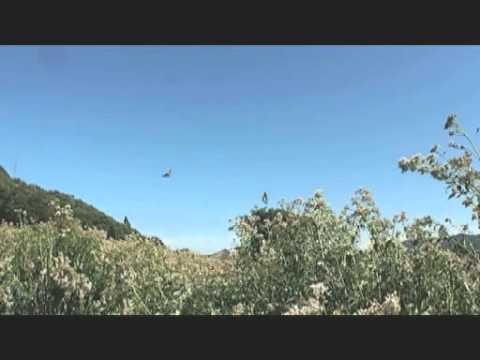 E-PL3 ビデオテスト アサギマダラの群飛