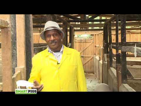 , title : 'From dairy farming to a more profitable Pig farming - Part 1