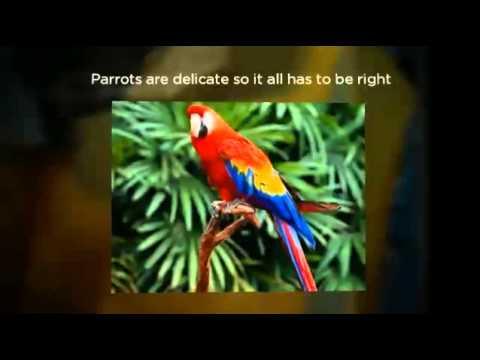 Parrot Care | All about parrots