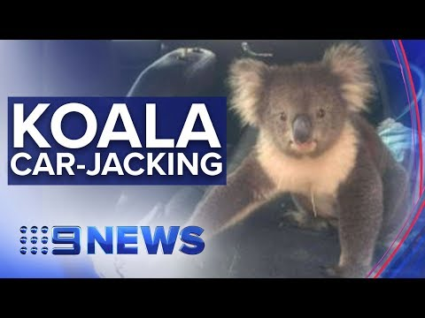 Car invasions are NEVER this cute! | Nine News Australia
