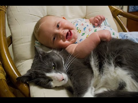 Cats Meeting Babies For The First Time Compilation