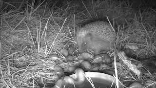 Wildlife Trail Camera - 6.8.2019
