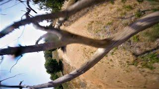 Crashes & Successes \ Tree Gaps \ Double V Gap :) \ FPV Freestyle