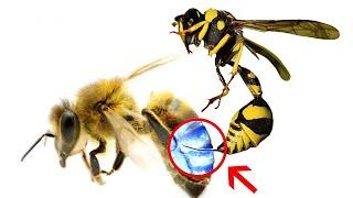 Co się stanie, gdy pszczoła użądli drugą pszczołę?