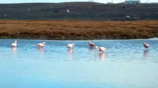 Who doesn't like Flamingos?
