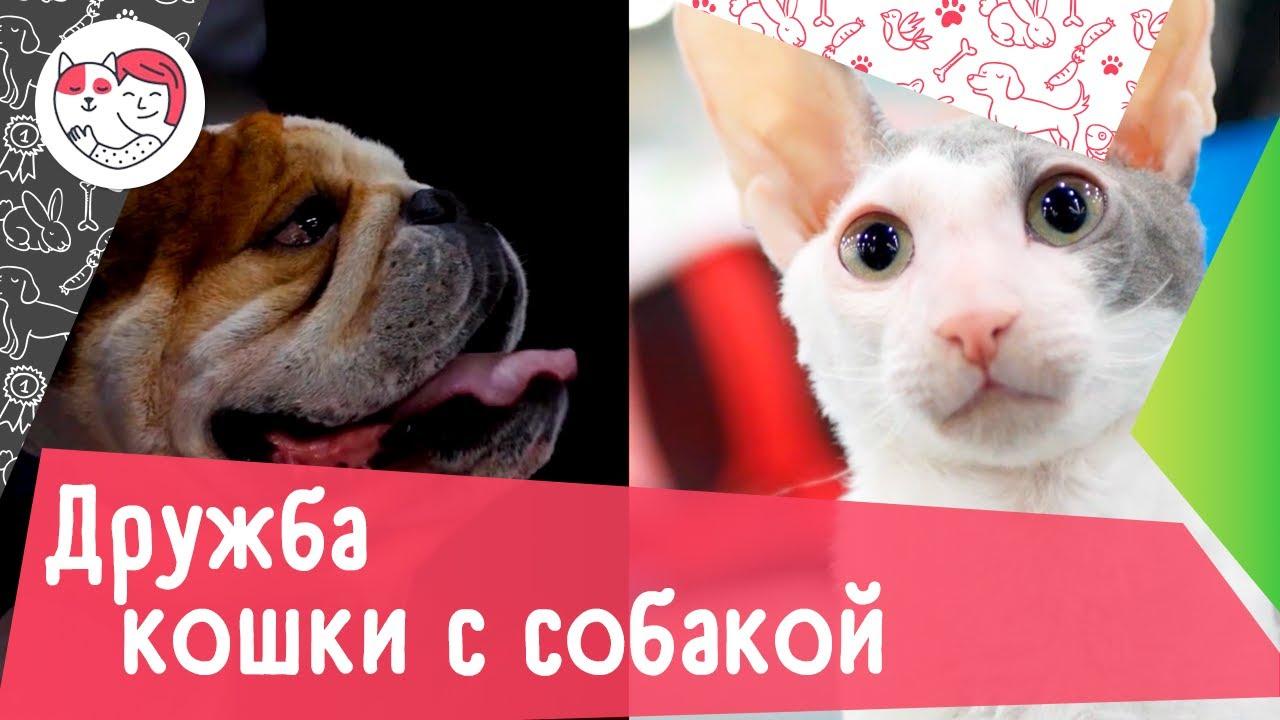 Как подружить кошку с собакой: 5 советов