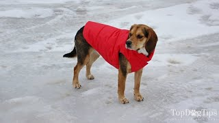 How to Keep Dogs Warm Outside and How Cold is Too Cold