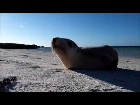 Ambrolhos Islands, Ambrolhos Archipel,Bahia,Brasilien