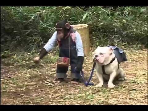 Chó và Khỉ này thông minh thật. Xem cười đâu cả bụng