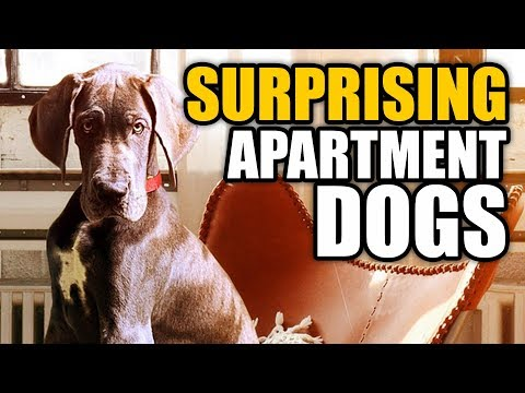 Surprising Apartment Dogs | Talkin' Dogs List Show