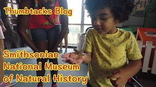 Kid View: Museum of Natural History in DC