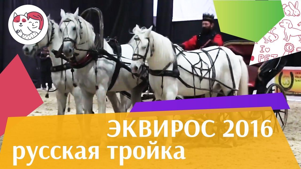 Русская тройка ЭКВИРОС 2016 на ilikepet