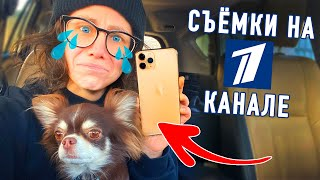 Я и моя собака на Первом Канале! Юми укусила собака! Украли Айфон! Как все устроено на телевидении?