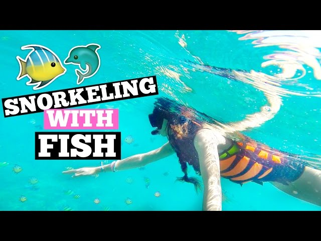 SNORKELING WITH FISH!! | Thailand Day 6