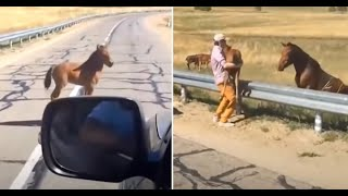Man Rescues Scared Foal Separated From Mother