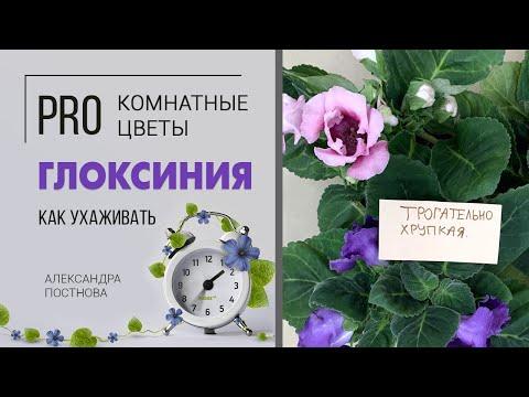 Цветок загадка | Как подружиться с глоксинией