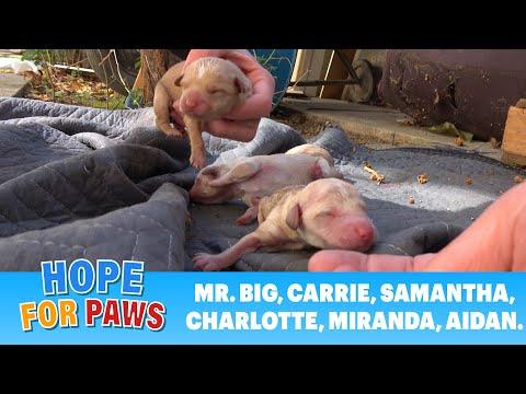 Puppies buiten op de grond geboren minuten voor onze aankomst