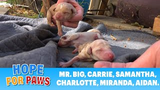 Puppies born outside on the floor minutes before our arrival 💔➡️💖