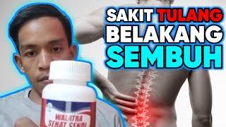Obat Nyeri Sendi Lutut - Radang Sendi Lutut - Tidak Bisa Ditekuk - Sendi Lutut Bengkak - Lutut Asam Urat - Lutut Rematik - SAMULINPRO SEHAT SENDI