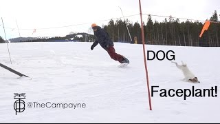Dog Faceplants chasing Snowboarder