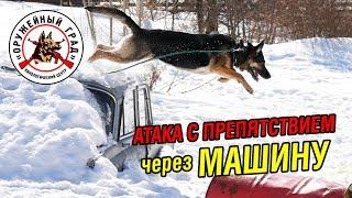 Атака фигуранта с препятствием через машину / Тренировка собак по ЗКС