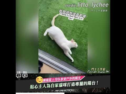 貓奴為貓咪特別製作的貓咪陽台