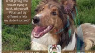 Dog Trainer Palm Beach County