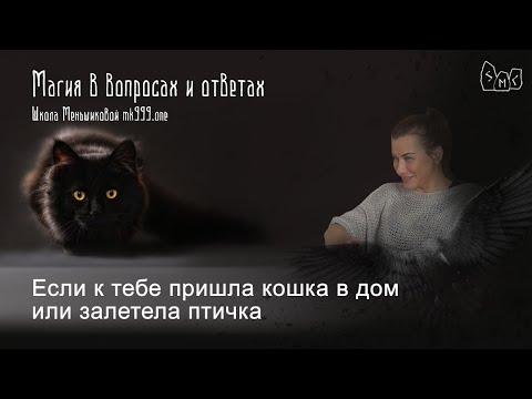 Если к тебе пришла кошка в дом или залетела птичка что это значит?